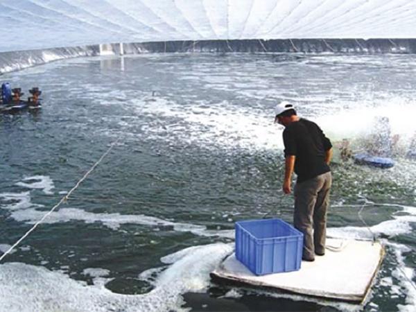 NT-Mẹo nuôi tôm mùa lạnh cực kỳ hiệu quả