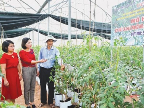 Trồng cà chua theo công nghệ Israel - hướng đi làm giàu mới