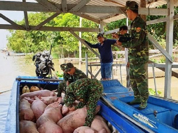 Nhập lậu heo ốm từ Campuchia vì giá rẻ hơn Việt Nam