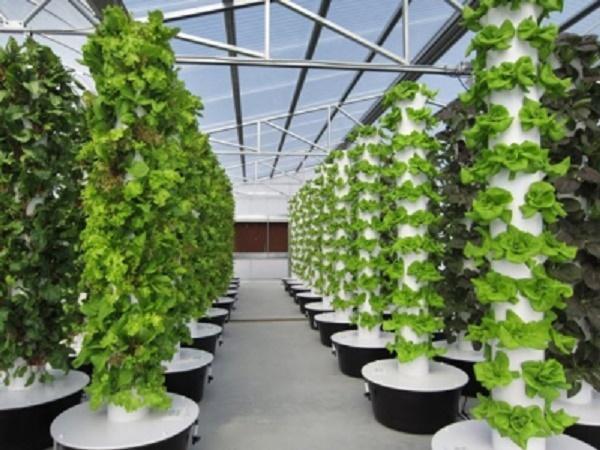 Máy trồng rau khí canh, xanh, sạch: Giải pháp cho phố thị chật chội