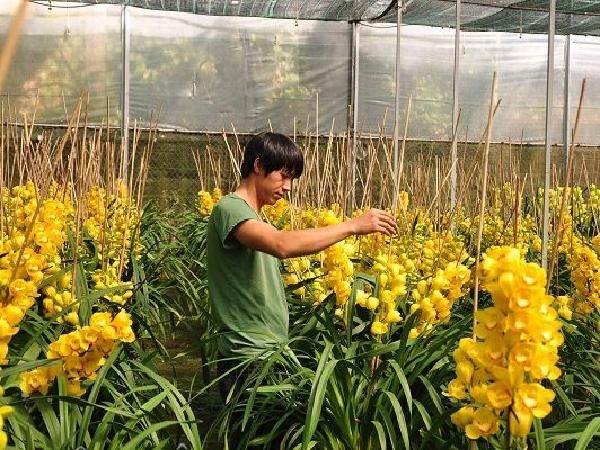 CS-Kinh nghiệm điều khiển một số loài hoa nở vào dịp Tết