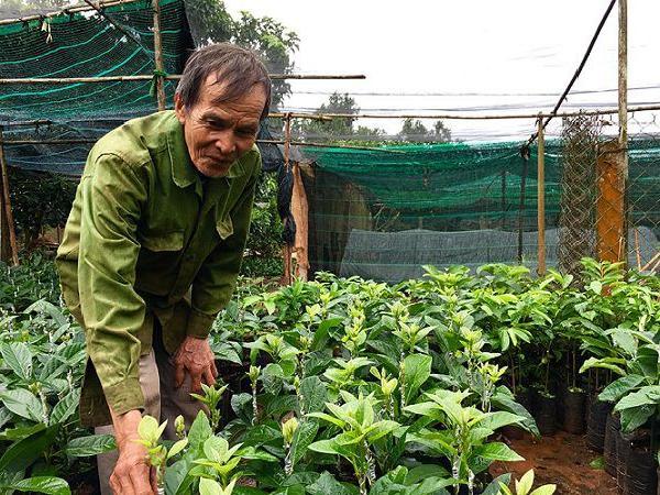 Làm giàu từ mô hình ươm và kinh doanh cây giống