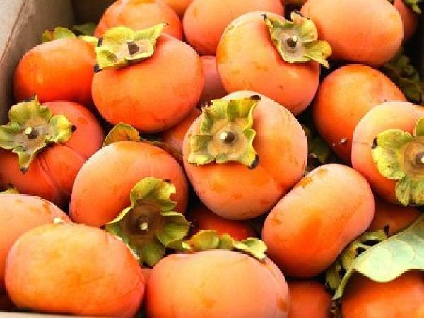 Bí quyết để cây hồng giòn có chất lượng quả tốt và khai thác lâu dài