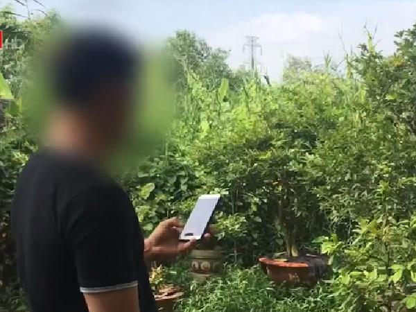 Cảnh báo: Giả vờ mua cây cảnh online, lừa đảo chiếm đoạt hàng chục triệu đồng