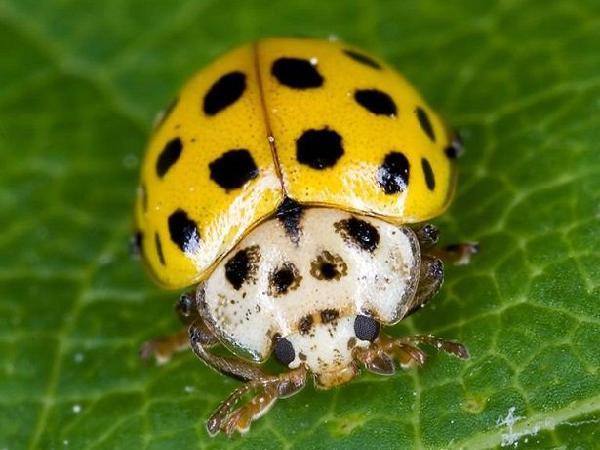 SB-Những loại côn trùng giúp nông dân diệt trừ sâu bệnh