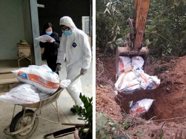 Chú ý: Cúm gia cầm H5N6 đã xuất hiện tại Quỳnh Lưu, Nghệ An