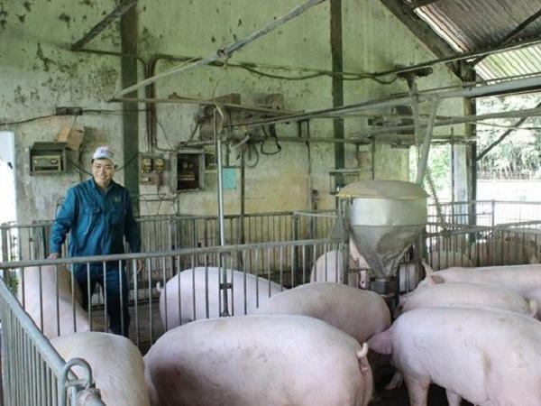 Tin đáng chú ý 03/12/2019: Lợn hơi chạm mốc 80.000 đồng/kg, giá gà tăng, hồ tiêu đi ngang