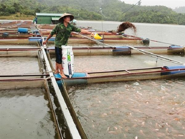 Nghề nuôi cá thu tiền tỷ ở vùng xa Lâm Đồng