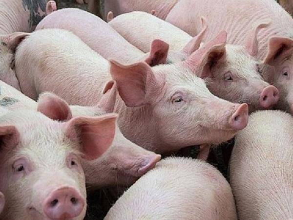 Giảm thuế nhập khẩu thịt lợn, người tiêu dùng hưởng lợi vì giá sản phẩm giảm