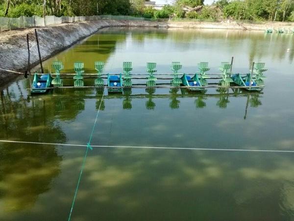 NT-Màu nước phản ánh tình trạng gì của ao nuôi và giải pháp?