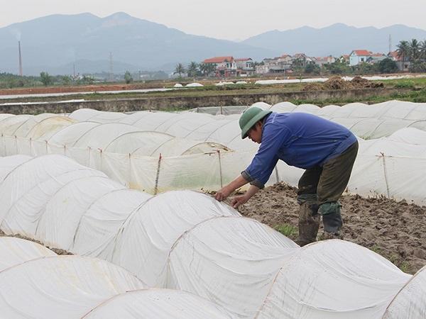Các biện pháp phòng chống rét cho cây trồng, vật nuôi, thủy sản