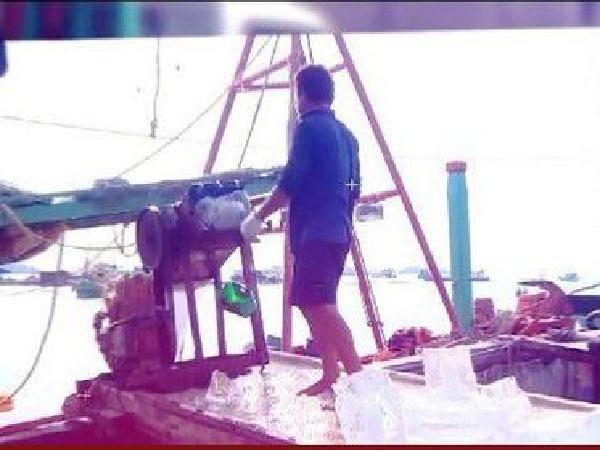 Đánh bắt thủy sản bằng xyanua – hậu quả khôn lường!