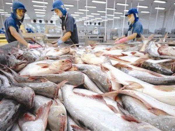 """Nỗi buồn của cá tra: xuất khẩu 150 nước nhưng lại """"ngoảnh mặt"""" với thị trường nội địa"""