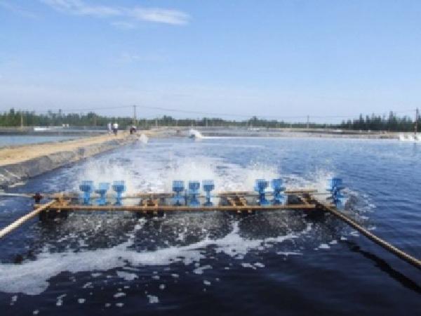 NT-Cách hạn chế chất thải trong nuôi thủy sản