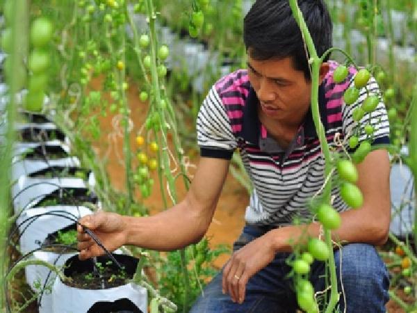 Nông dân an nhàn nhờ tưới tiết kiệm thời công nghệ 4.0
