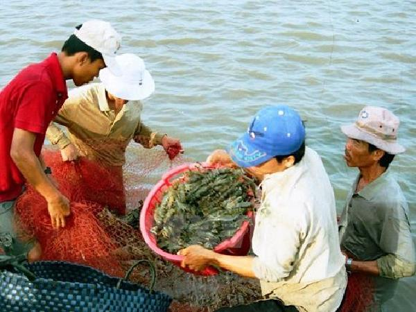Thuế giảm, xuất khẩu tôm Việt Nam năm 2020 sẽ lạc quan hơn