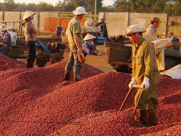 Nguồn cung giảm, giá cà phê có cơ hội bùng nổ trong năm 2020?