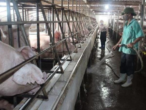 Những điểm cần chú ý trong Luật chăn nuôi có hiệu lực từ 2020