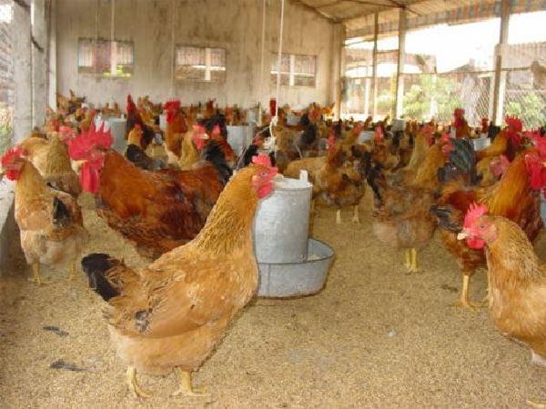 Tin vui từ thị trường Hồng Kông cho thịt và trứng gia cầm của Việt Nam