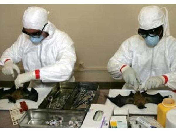 Phòng, chống nguy cơ xâm nhiễm, lây lan vi rút corona ở động vật
