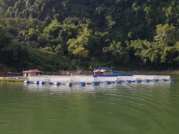 Cẩn trọng với hiện tượng cá nuôi lồng bè chết hàng loạt ở An Giang