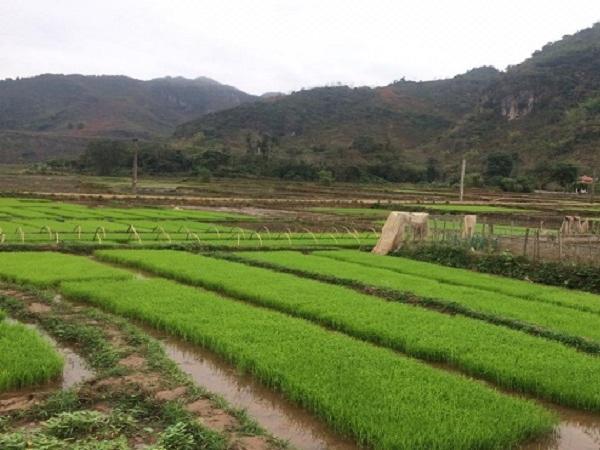Vi phạm về sản xuất, buôn bán giống cây trồng có thể phạt đến 100 triệu đồng
