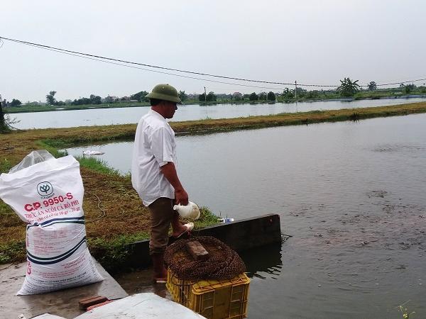 Hải Dương: Đẩy mạnh ứng dụng công nghệ biofloc trong nuôi thủy sản