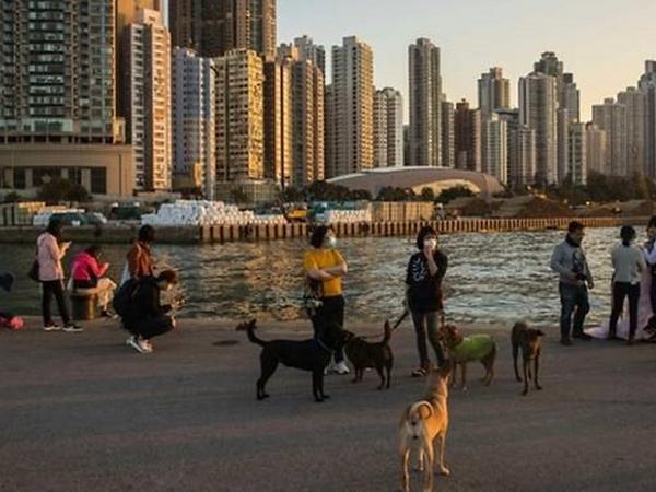 Hong Kong xác nhận ca COVID-19 đầu tiên nghi lây từ người sang thú cưng