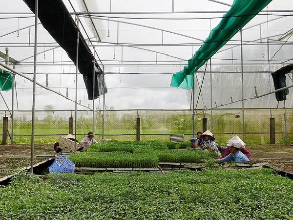 Ứng dụng hệ thống nhà lưới, nhà màng trong sản xuất nông nghiệp