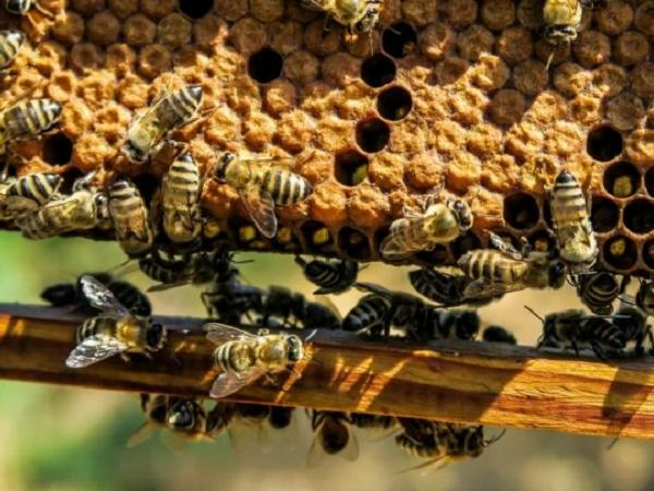 N-Mở thùng nuôi ong: Kỹ thuật phải nắm