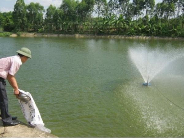 XL-Xử lý môi trường ao nuôi cá để cải thiện năng suất