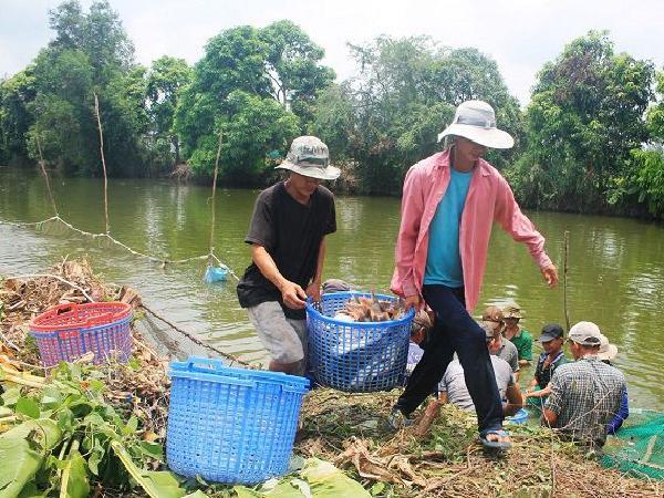 Thị trường ảm đạm, giá nhiều loại cá nuôi giảm mạnh