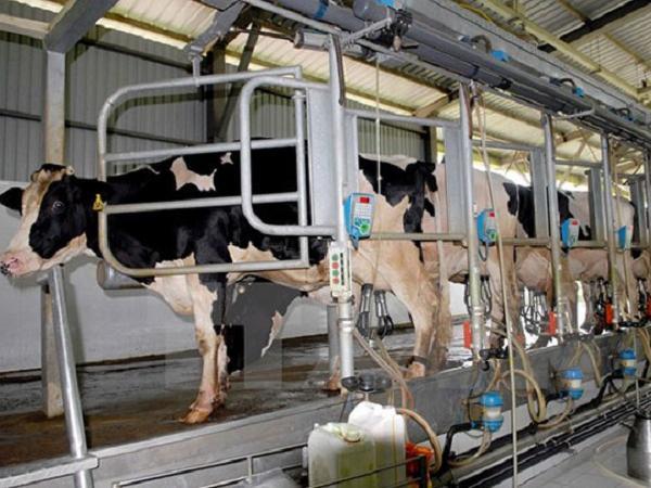 Thanh Oai phát triển chăn nuôi công nghệ cao