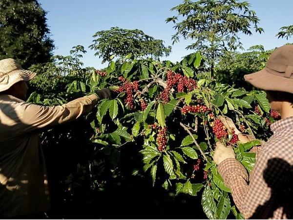 Thiết lập kênh tiêu thụ nông sản cho người dân trong thời gian dịch Covid-19