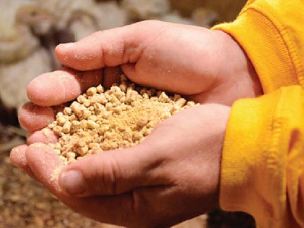 N-Cách hiểu sai về thức ăn chăn nuôi
