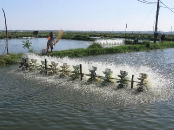 XL-Cách tăng và giảm độ pH trong nước ao nuôi trồng thủy sản