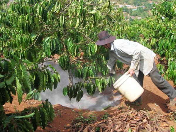 CS-Nguyên tắc sử dụng vôi và lân nhà nông cần biết