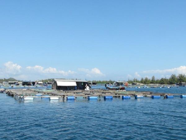 NT-Sự quan trọng của men vi sinh trong nuôi trồng thủy sản