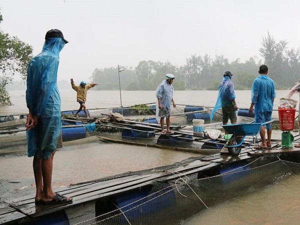 NT-Mùa mưa bão năm 2020 diễn biến phức tạp, bà con nuôi cá cần đặc biệt lưu ý