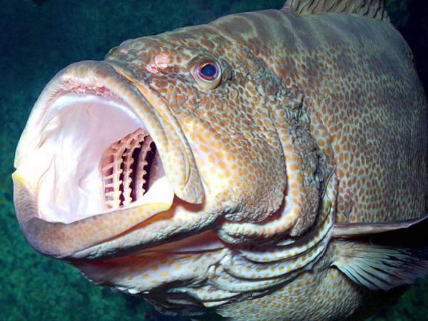 CB-Kiểm soát bệnh thối mang, thối vây trên cá mú
