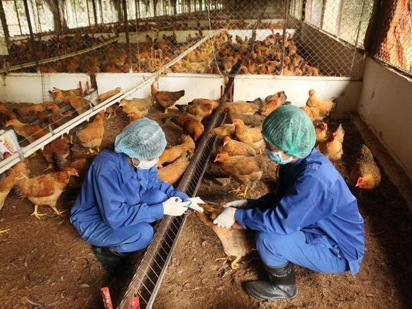 N-Những điều cần lưu ý khi sử dụng vaccine trong chăn nuôi