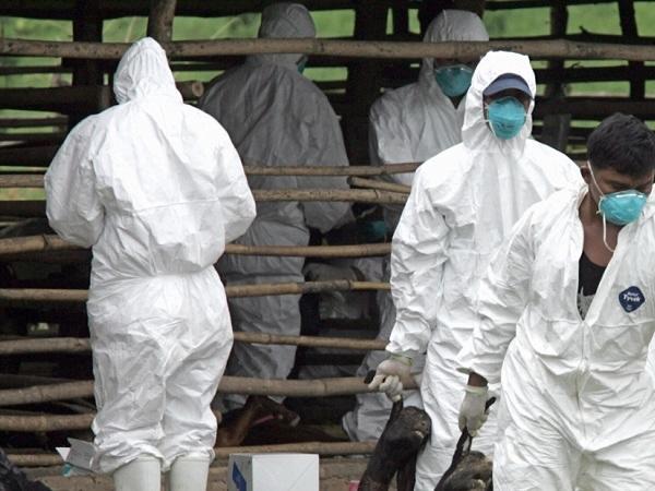 Thái Lan xuất hiện bệnh virus ngựa châu Phi, các nước Đông Nam Á lo ngại đại dịch mới