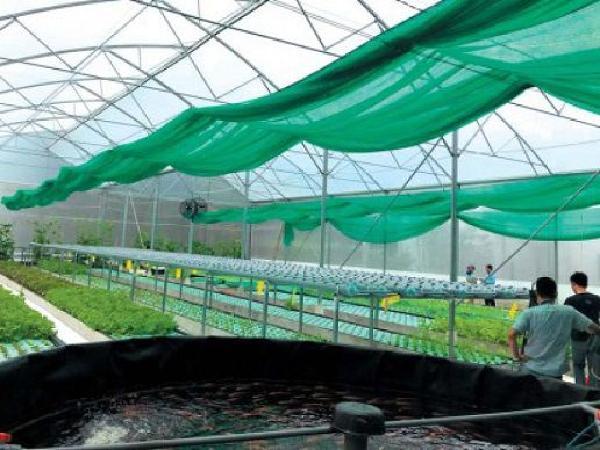 Aquaponics - mô hình nông nghiệp hiện đại, xu hướng của tương lai