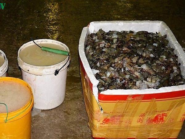 Thương lái ở Cà Mau bị phạt 60 triệu đồng vì đưa tạp chất vào tôm