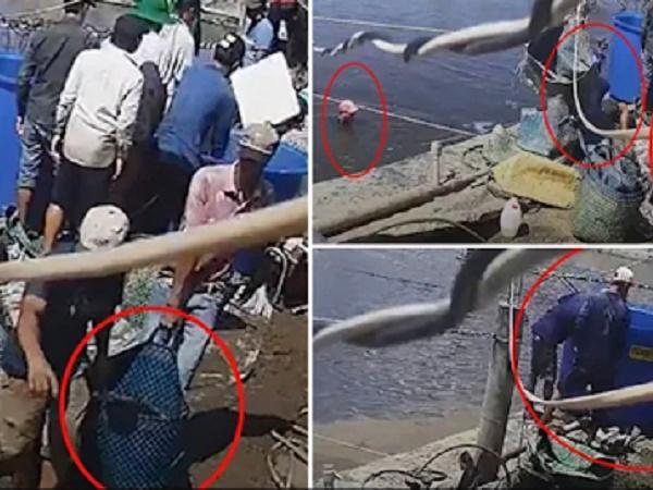 Bức xúc chuyện thương lái ăn trộm hàng tấn tôm của người dân
