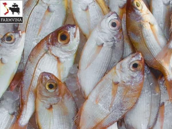 NT-Những loại thủy sản dễ nuôi phù hợp với người mới bắt đầu