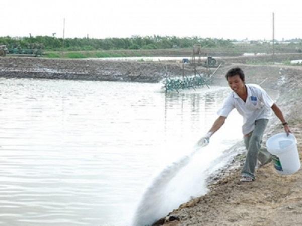 NT-Kỹ thuật sử dụng vôi trong nuôi trồng thủy sản bà con nên biết