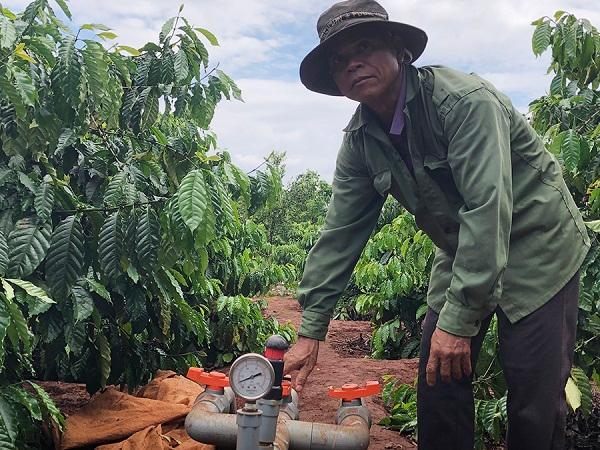Tưới tiết kiệm nước trên cây cà phê, giảm chi phí, tăng năng suất