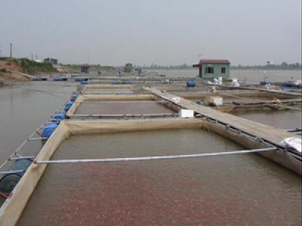 NT-Kỹ thuật nuôi cá diêu hồng trong lồng bè trên sông và hồ chứa