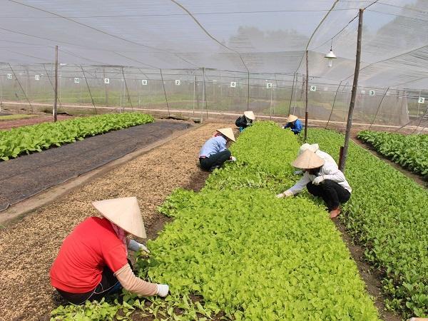 CS-Cách pha một số chế phẩm sử dụng trong sản xuất nông nghiệp hữu cơ